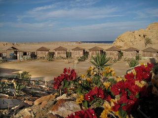 Roots Camp Red Sea in El Quseir • HolidayCheck | Marsa Alam/El Quseir, Ägypten