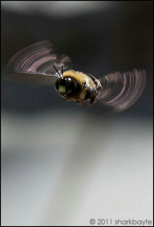 Great photo shot of a bee~