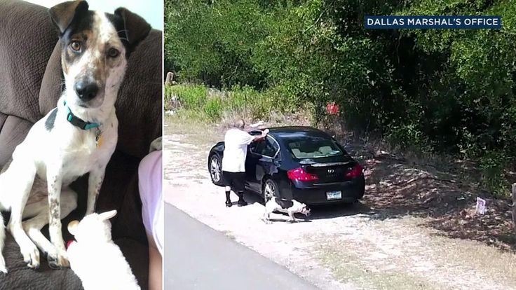 A traffic camera in Dallas, Texas, captured a man abandoning his dog on the side of the road.