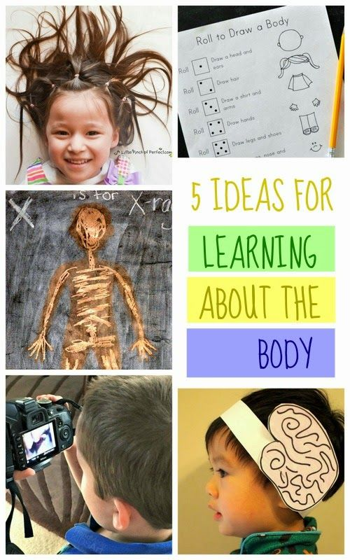 5 Ideas for Learning about different body parts (hair, skeleton, whole body, and brain!)