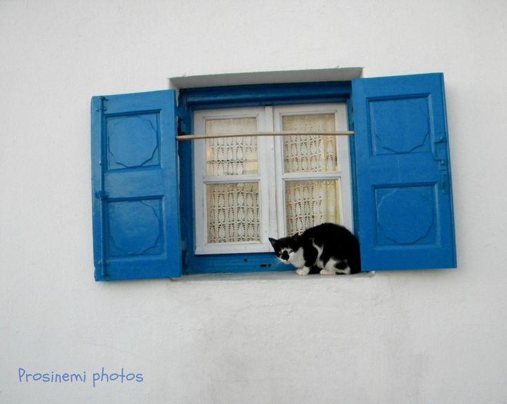 Βlue window with a cat, blue summer decoration, home wall art print, summer decor Greece Mykonos by prosinemi on Etsy