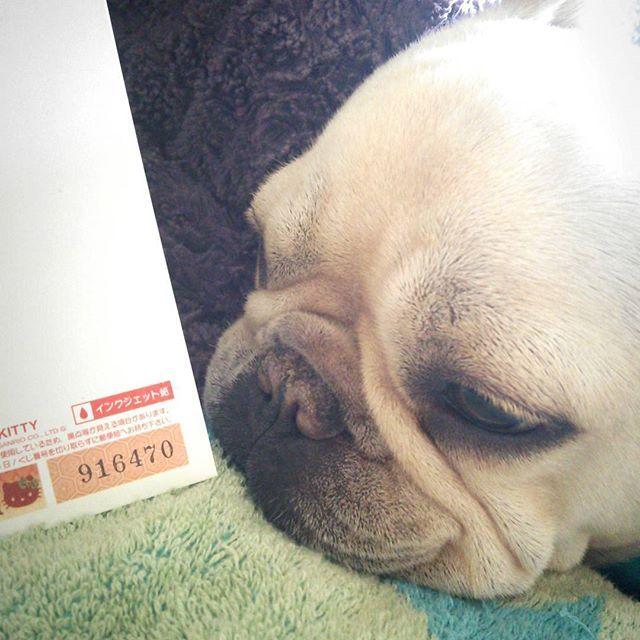 お年玉年賀はがき❢残ったハガキの中に2等発見-(o゚Д゚ノ)ノ  いつもは切手シートさえも1、2枚当たるかどうかくらいなのに〜❢ 今年入って連発してる❢ とりあえず今すぐ宝くじ買ってこようかな笑笑❣ #当たり#お年玉年賀はがき2等#何もらえるのかな#ボスさん#フレンチブルドッグ#フレブル#愛犬