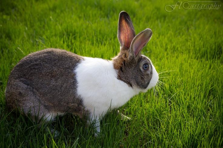 Foto Bunny 1 by Floartgraphy