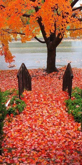 Autumn, Fall leaves