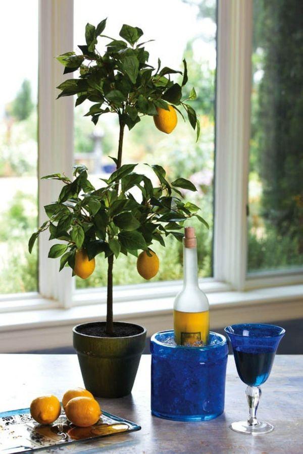 zimmerpflanzen zitronenbaum topfpflanze