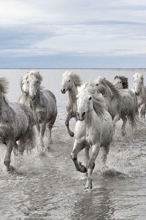 au grand gallop....