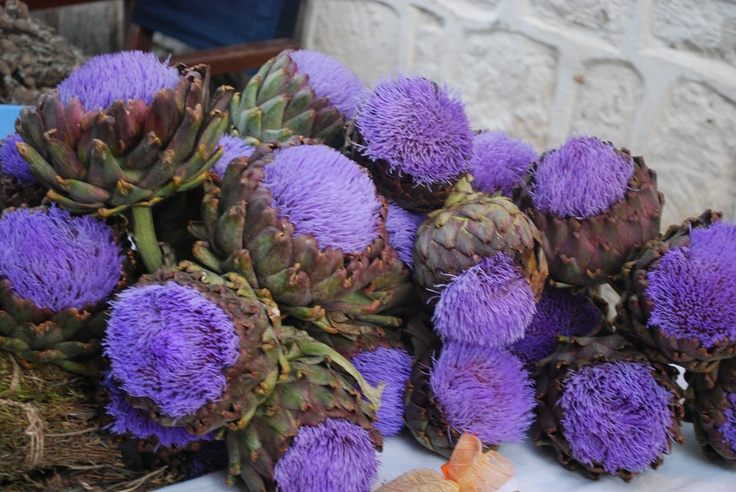 Artichoke Flowers - Cesme,Turkey