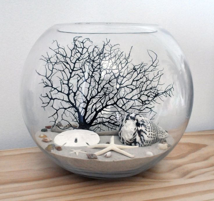 Coastal Glass Fishbowl Terrarium SEA FAN Starfish Shells Sand Dollar SEA Urchin in Clayton South, VIC | eBay