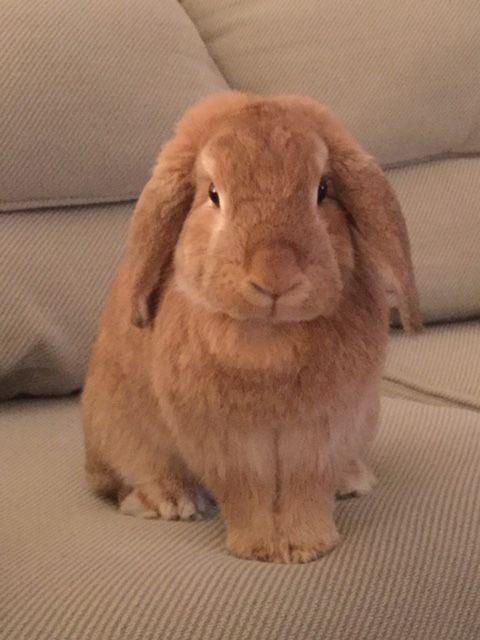 Les 25 meilleures id es de la cat gorie lapin belier sur pinterest lapin lapins et lapin mignon - 4 images 1 mot poussin lapin ...