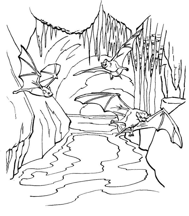 Kolorystyka nietoperzy