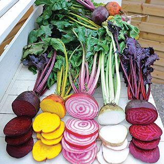 Rainbow Mix Beet Seeds