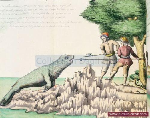 Lion marin rencontré près du détroit de Magellan - Relation journalière d'un voyage fait par Mr de Beauchesne capitaine de vaisseau de 1698 à 1701