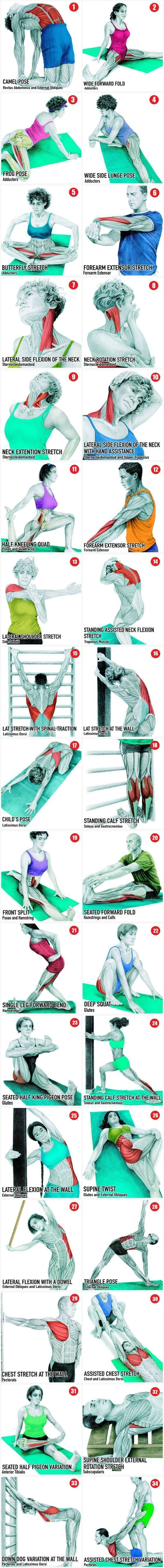 34 Helpful pictures to see which Muscle is being stretched. Repinned by PT Solutions. Follow us at pinterest.com/myptsolutions