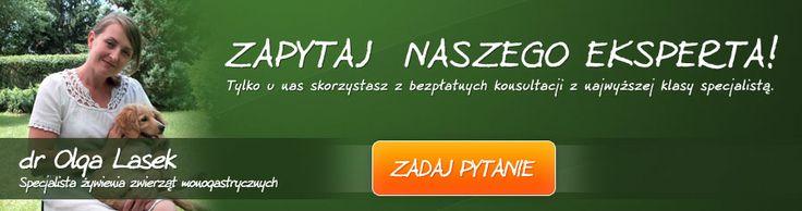 Dogosfera.pl - baner na portal