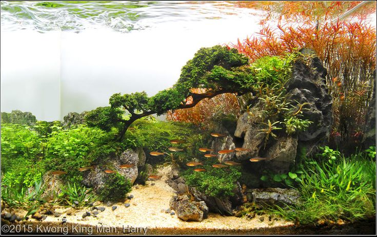 ... and Fish on Pinterest Cichlids, Tropical fish and Aquascaping