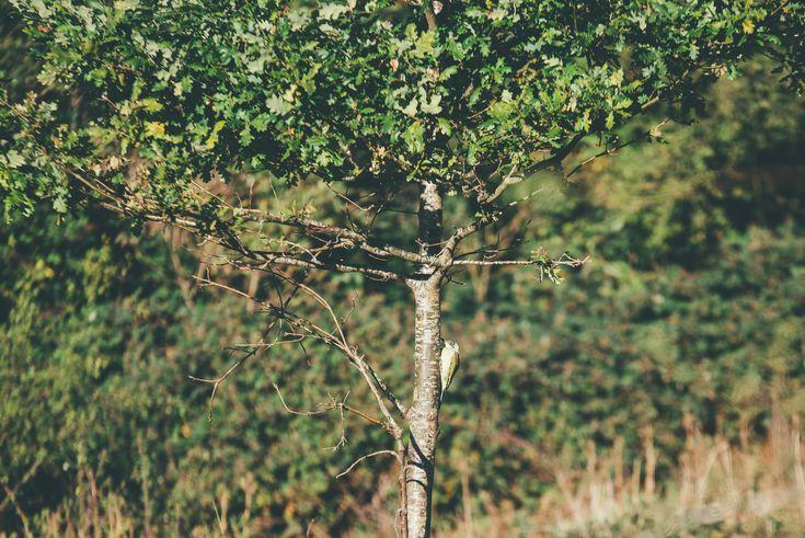 European Green Woodpeck at Prior Park, Bath  Bex & Adam // Engagement // Prior Park // Bath Matt Fox Photography