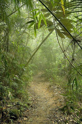 Trilha através da Mata Atlântica, no Parque Nacional da Tijuca, na cidade do Rio de Janeiro, RJ, Brasil.