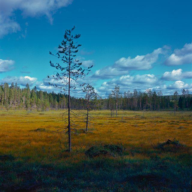 einer von tausenden Sümpfen in der Gemeinde Taivalkoski, Lapland, Finland