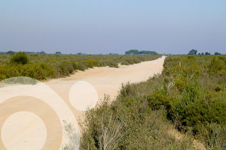 Scrubland in Doñana. More information to plan your trip to #Doñana in www.qnatur.com