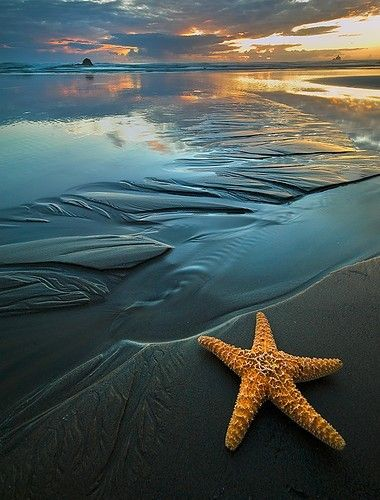the sea!Sea Stars, Beach Sunsets, Sunsets Beach, Cannon Beach, The Ocean, Beautiful, Starfish, Ocean Sunset, At The Beach