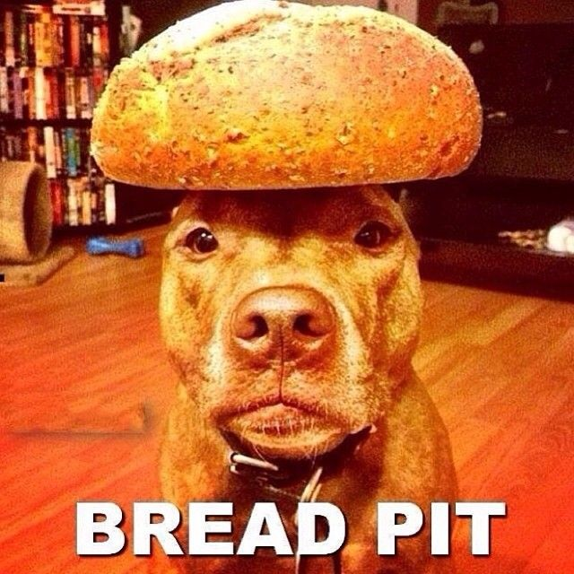 Bred Pit - http://absurdpics.com/funny/bred-pit/