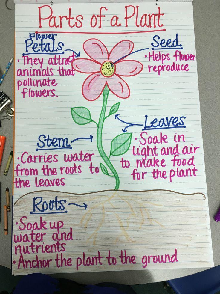 17 Creative Ways to Teach Plant Life Cycle Teaching