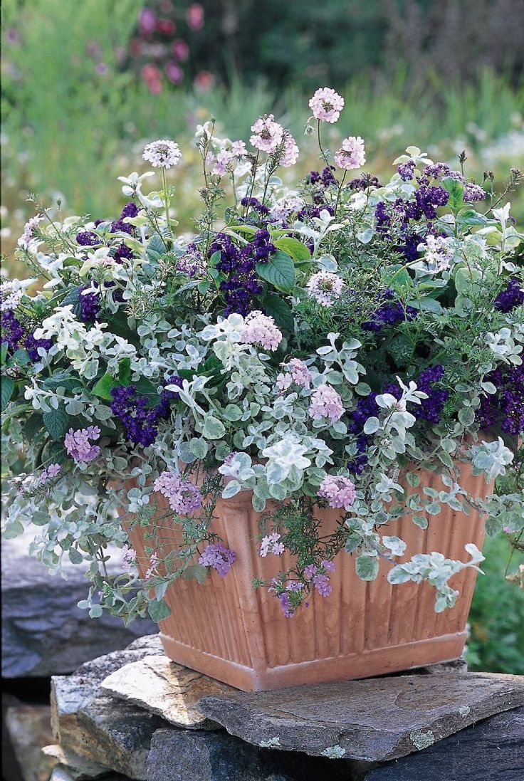 This container garden uses silvers with muted pink to great affect. The dark purple gives the composition just a little punch. The synthetic terra cotta planter is understated and enhances the colors of the flowers. This container garden comes in a kit from White Flower Farm