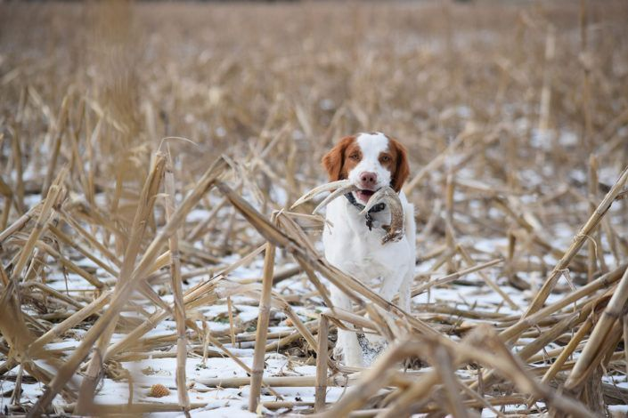 Shed Hunting Dog Training Training Your Dog Easiest Dogs To