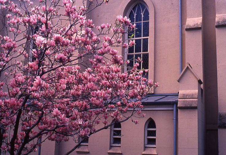This is one photo from a series I did on 35mm positive film in my first year of uni (2011) This photo was based around one colour palette (pinky pastel) -Taken in Melbourne