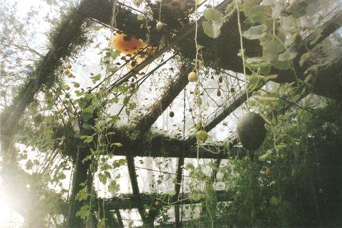 conservatory greenhouse heaven