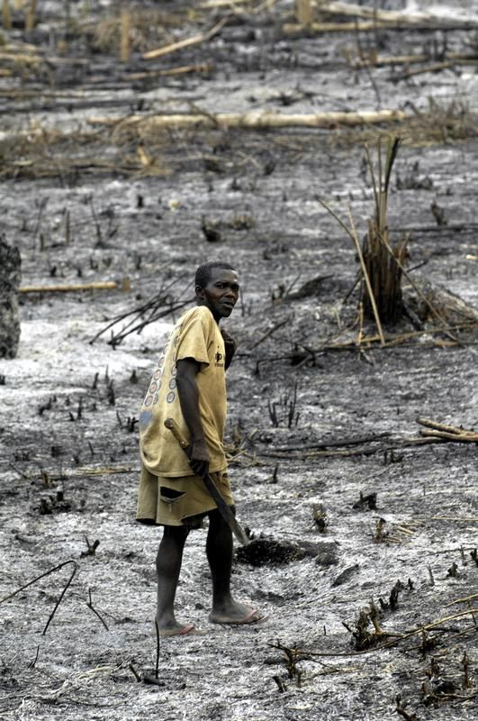 Cleared Rainforest in DRC -  A man walks in a forest area cleared by fire. © Thomas Einberger / argum / Greenpeace