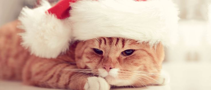 Pet allergies don't have to ruin your holidays. Consumer Reports recommends the vacuums, air purifiers, and allergy drugs that can help.