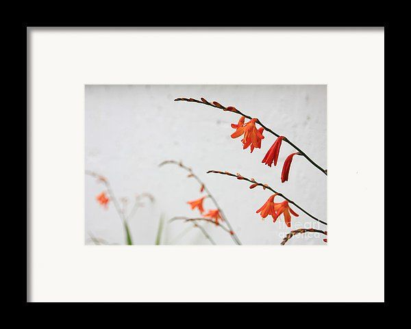 Flora Framed Print featuring the photograph Orange Garden Flower by Sverre…