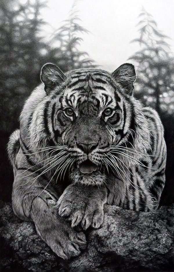 Realistic Animal Pencil Drawings (19)