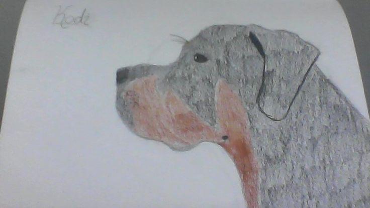 A drawing of my dog Kodi <3