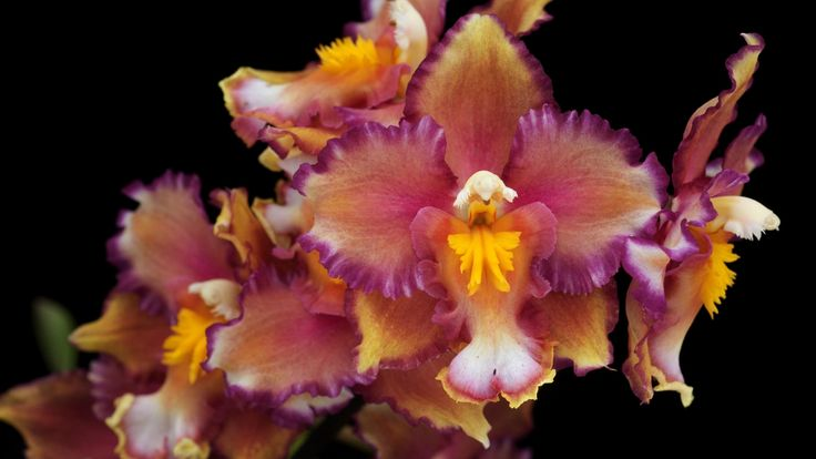 2560x1440 Wallpaper orchids, flowers, branches, close up