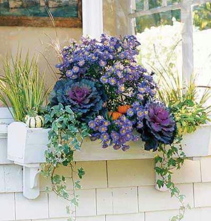 Fall Window Box: Cabbage Rose Purple & Ivy