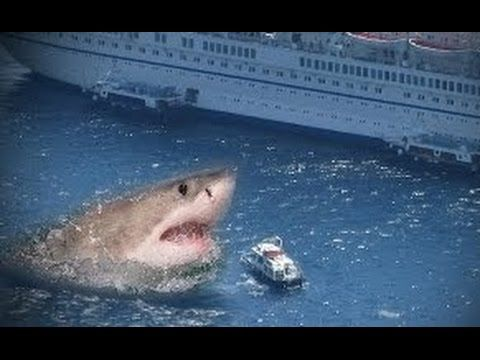 Real Megalodon (Biggest Shark Ever) Proofs!! Genuine Megalodon Sightings Megalodons are World's largest sharks ever! These giant sea monsters didn't go extin...