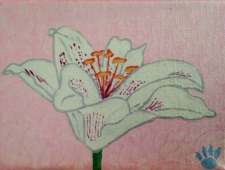 Lily with Pink Background by lionsintheclouds   This lily image is produced from an original painting by Lions in the Clouds of acrylics on canvas. The white lily has pink and silver highlights and sits on a pink background.