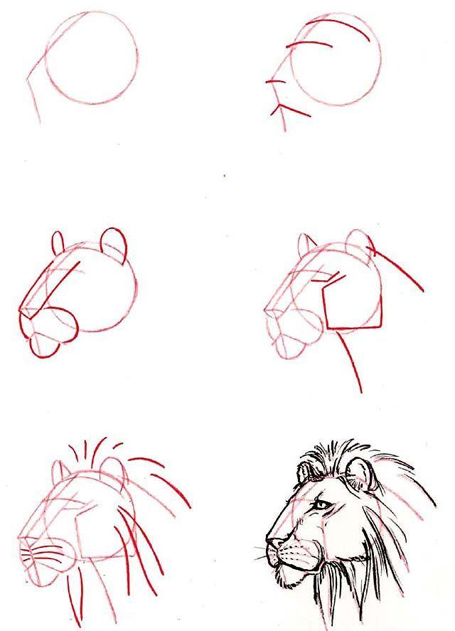 Como desenhar uma cabeça de leão. (how to draw a lion's head)