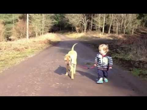 Little boy with his dog stop to play in a puddle