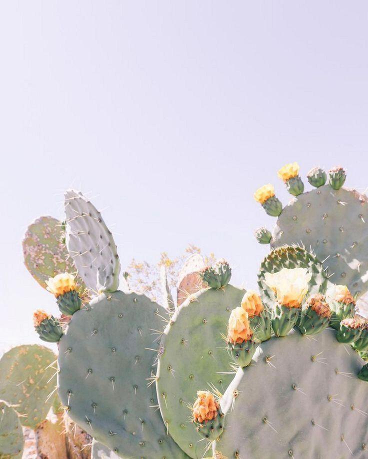 45+ Creative DIY Cactus Planters You Should Copy Right Now