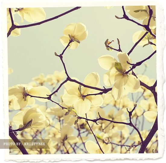 Pin Blossoms Krtisty Bee Photography Etsy Yellow Inspiration Pretty Style Photoh