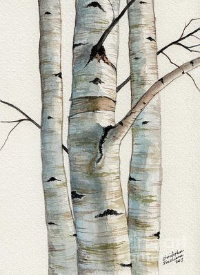 Here is a beautiful watercolor painting of three birch trees.