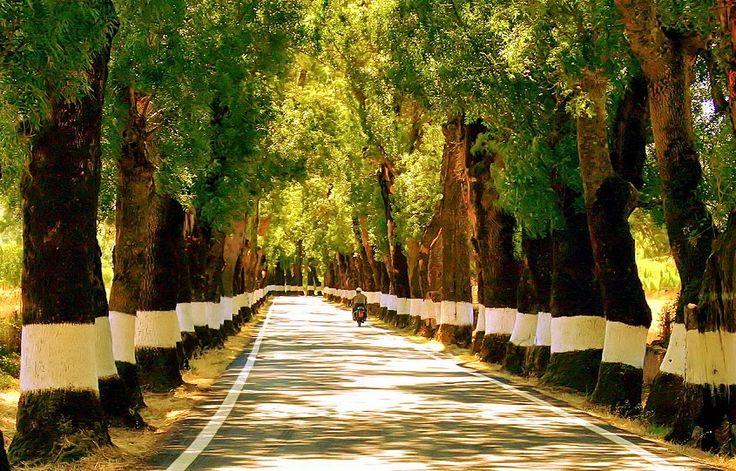 Quem passeia pelo Alentejo e já se cruzou com esta fantástica estrada com toda a certeza não a esquecerá. Conheça a estrada mais bonita do Alentejo.