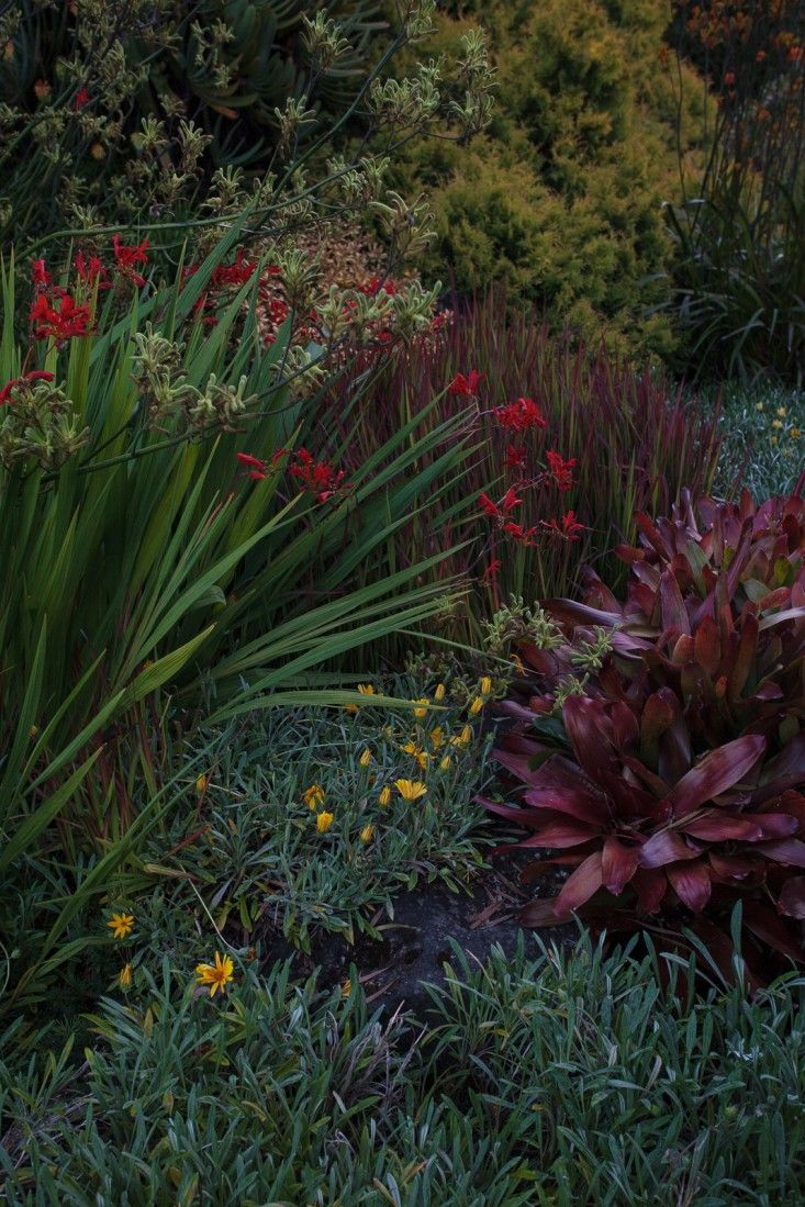 Ayrlies New Zealand McConnell garden ; Gardenista