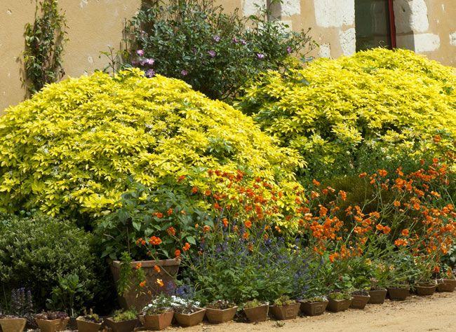 19 best wish list plants images on pinterest landscaping. Black Bedroom Furniture Sets. Home Design Ideas