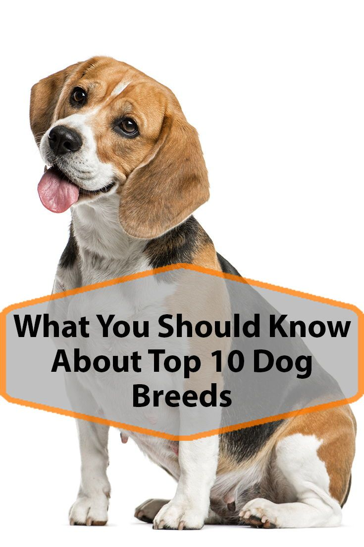 Find Out Which Dog Breed Is Best For You Dog Breeds Dogs Top