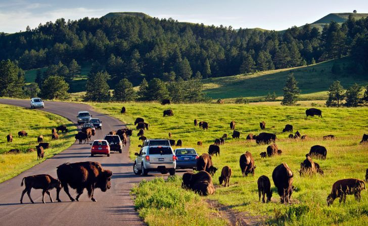 Top 10 Attractions In The Black Hills (Besides Mount Rushmore)