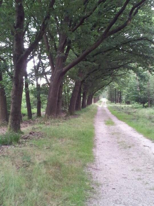 Omgeving Hoenderloo Holland